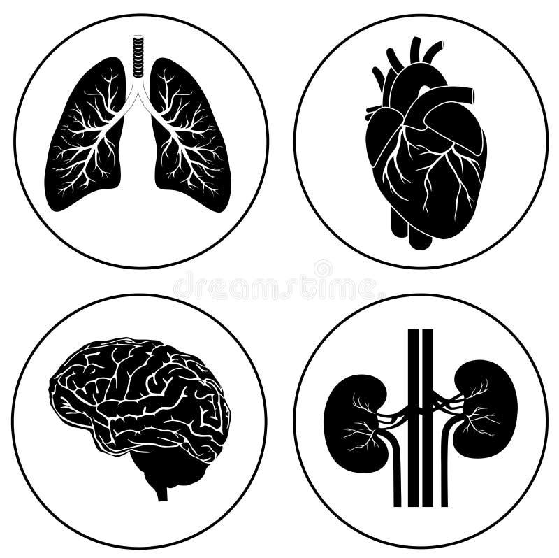 Ícone preto dos órgãos humanos ilustração royalty free