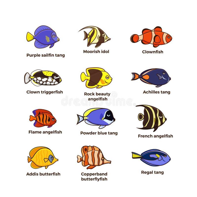 Ícones bonitos da ilustração do vetor dos peixes ajustados Peixes tropicais, peixes de mar, ilustração stock