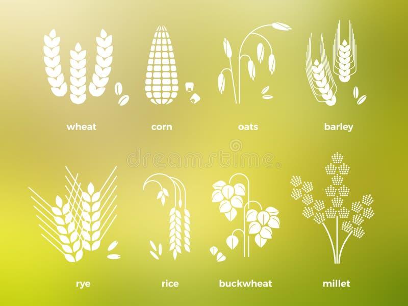 Ícones brancos dos cereais arroz, trigo, milho, aveia, centeio, cevada ilustração stock