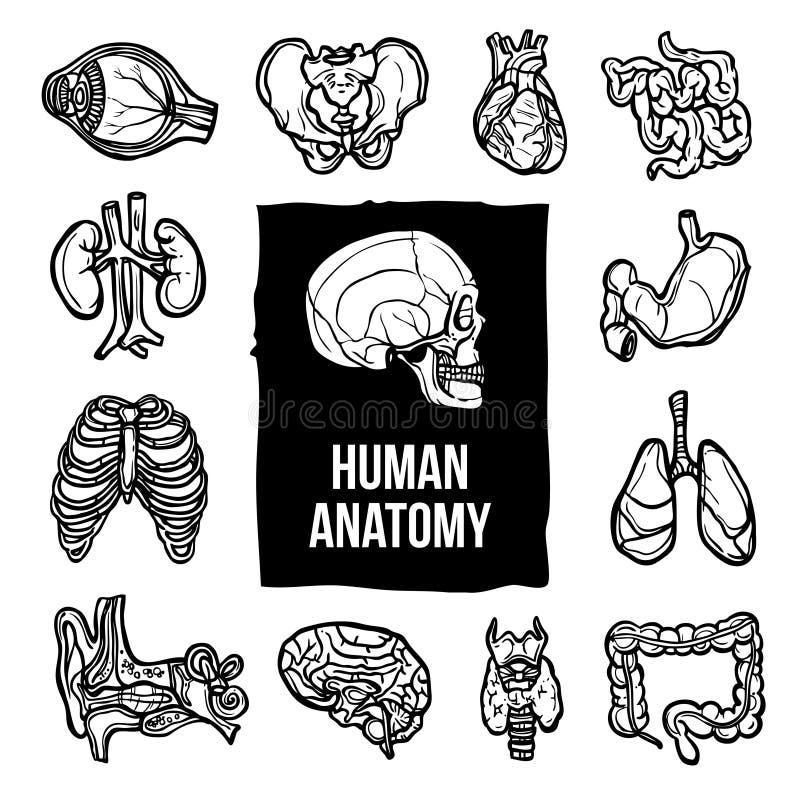 Ícones da anatomia ajustados ilustração royalty free