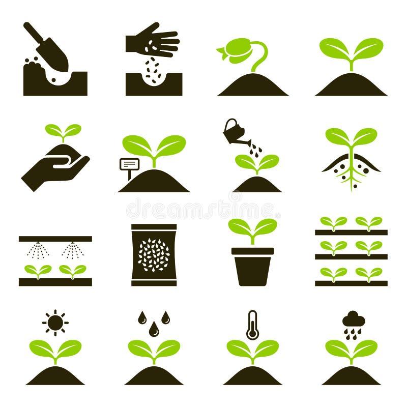 Ícones da planta Graphhics do vetor ilustração stock
