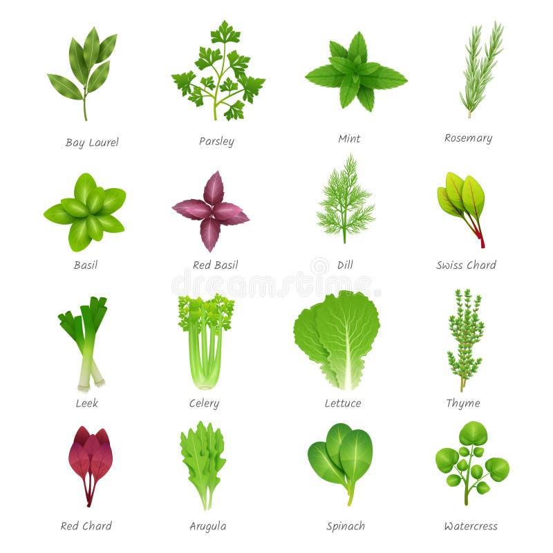 Ícones das ervas ajustados ilustração stock