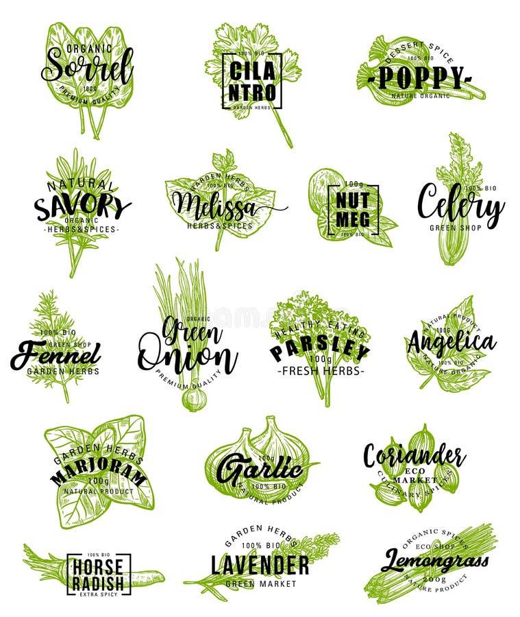 Ícones das especiarias e das ervas com rotulação ilustração stock