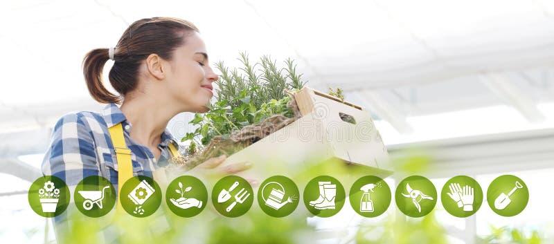 Ícones do comércio eletrônico do equipamento de jardinagem, ervas aromáticas de sorriso da especiaria do cheiro da mulher no fund imagem de stock royalty free