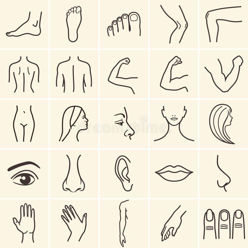 Ícones do corpo ilustração do vetor