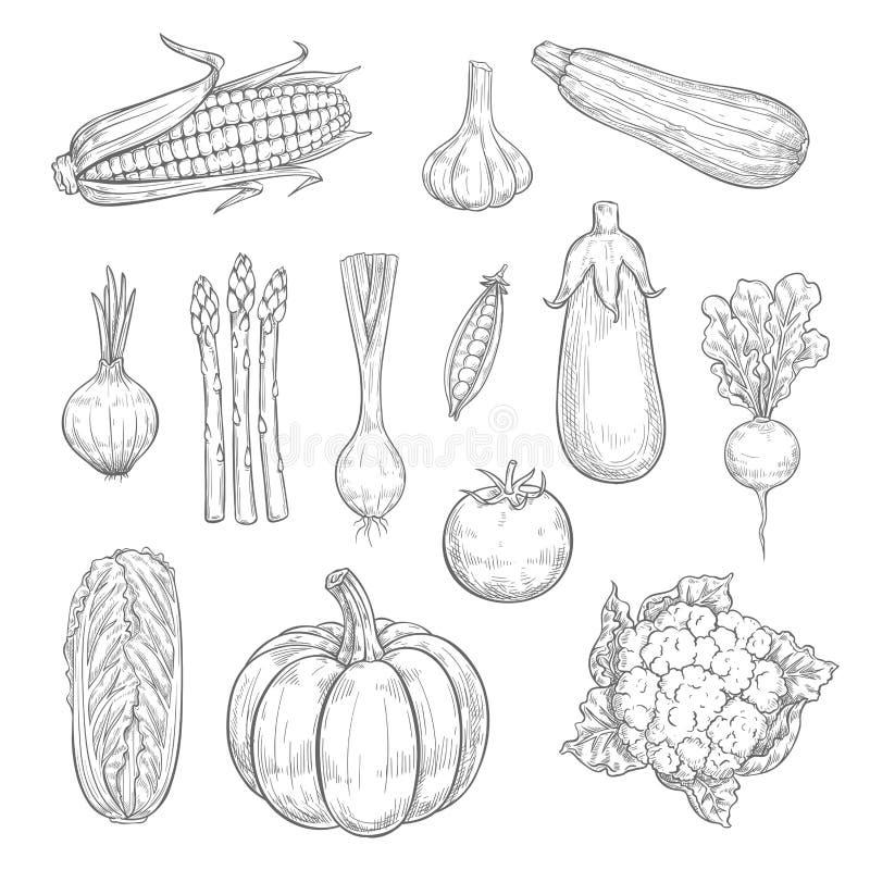 Ícones do esboço da colheita dos vegetais ou dos vegetarianos do vetor ilustração do vetor