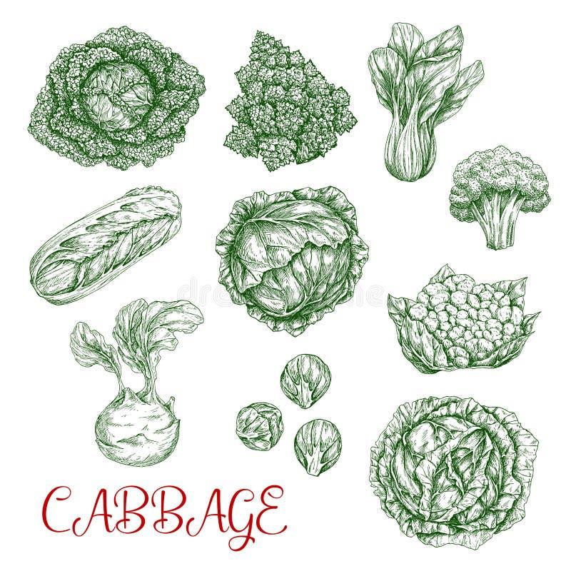 Ícones do esboço do vetor da couve dos vegetais ilustração do vetor