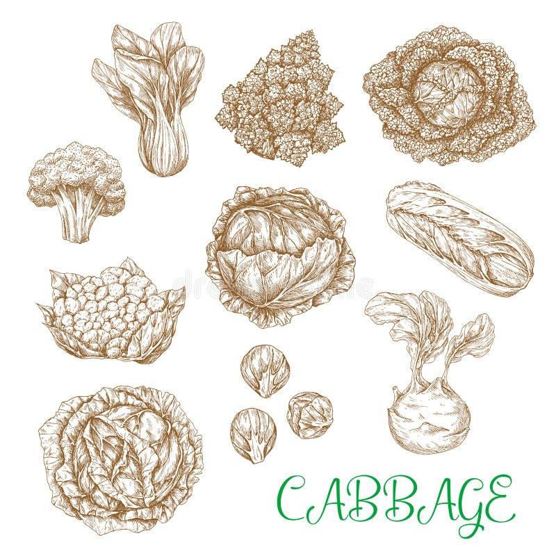 Ícones do esboço do vetor de vegetais da couve ilustração stock