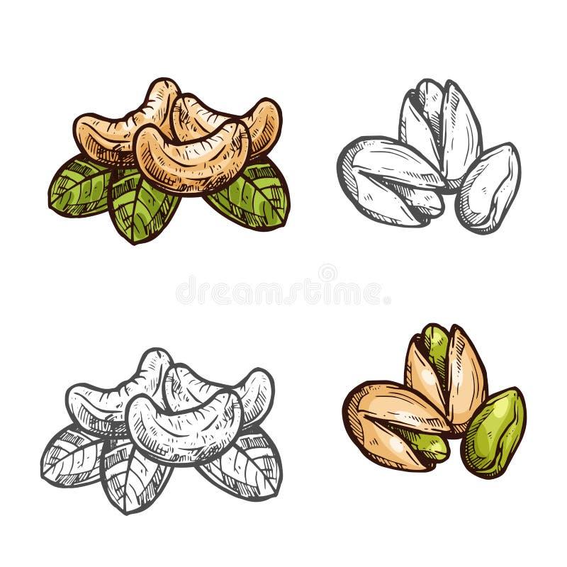 Ícones do esboço dos frutos do vetor das porcas de pistache do caju ilustração royalty free
