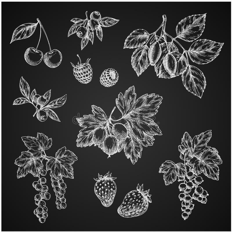Ícones do esboço do giz de Vectro de frutos de bagas ilustração royalty free