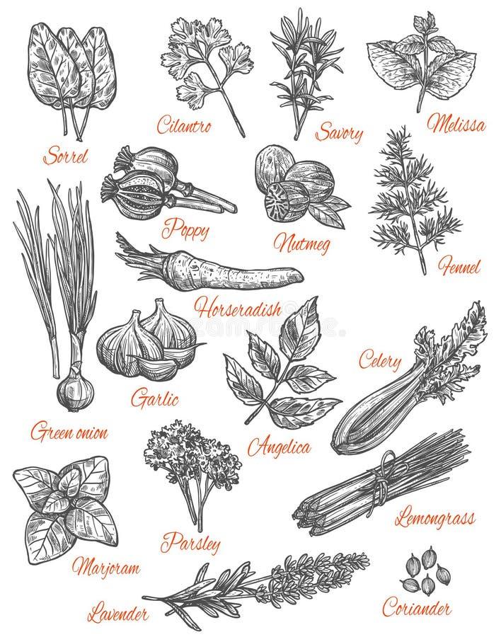 Ícones do esboço do vetor da loja das especiarias das ervas ilustração royalty free