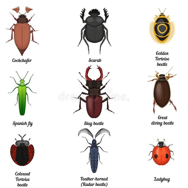Ícones do inseto ajustados Coleção entomológica do ícone do erro do besouro Ideia superior dos besouros e dos erros ilustração royalty free