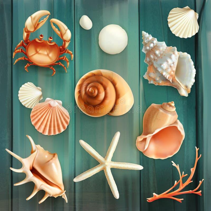 Ícones do vetor das conchas do mar