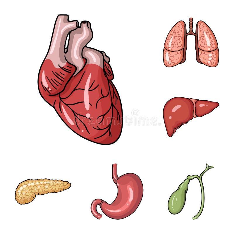 Ícones dos desenhos animados dos órgãos humanos na coleção do grupo para o projeto A anatomia e os órgãos internos vector a Web c ilustração do vetor