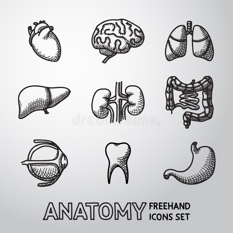 Ícones handdrawn internos dos órgãos humanos ajustados com - ilustração royalty free