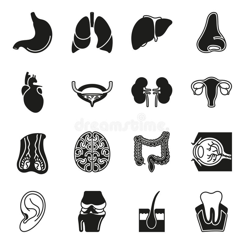 Ícones internos dos órgãos humanos ajustados ilustração stock