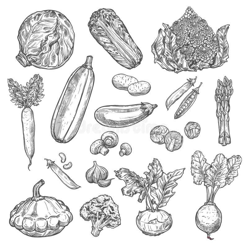 Ícones isolados do esboço dos vegetais vetor orgânico ilustração royalty free
