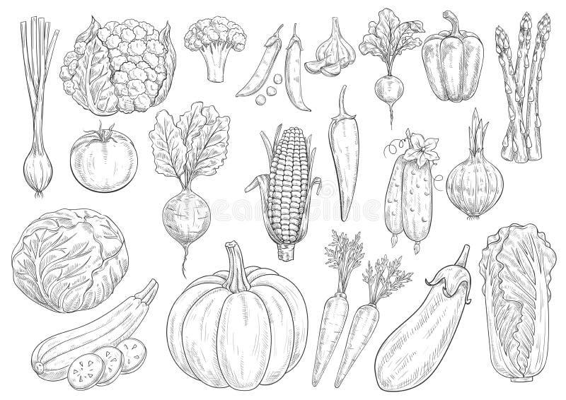 Ícones isolados esboço do vetor dos vegetais ilustração stock