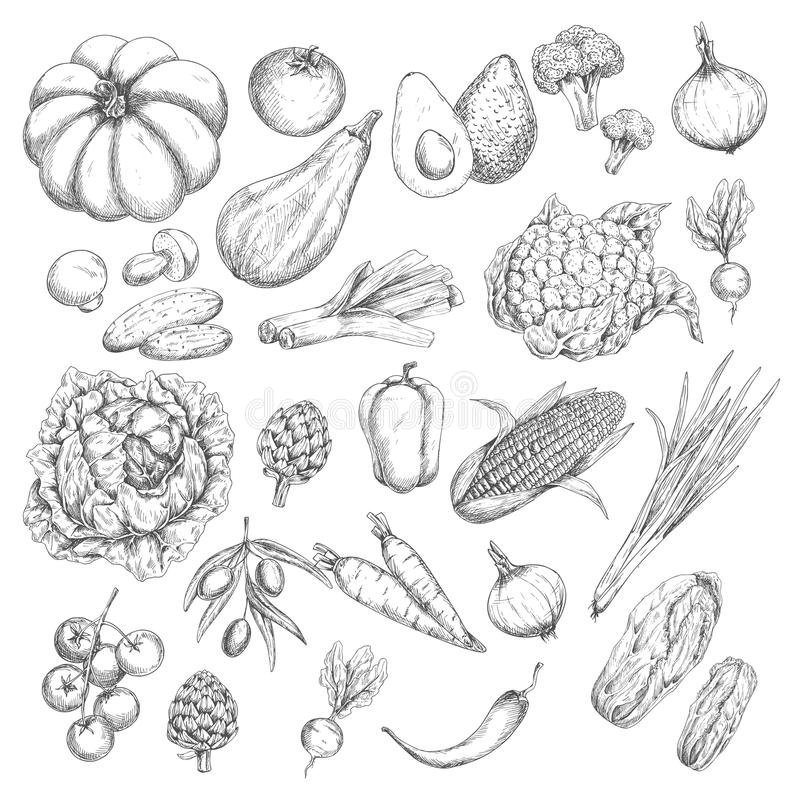 Ícones isolados esboço dos vegetais ou dos vegetarianos do vetor ilustração do vetor