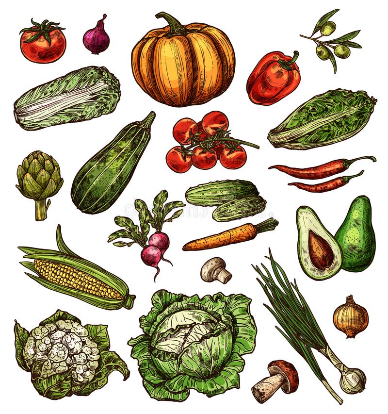 Ícones isolados vetor do esboço dos vegetais ilustração royalty free