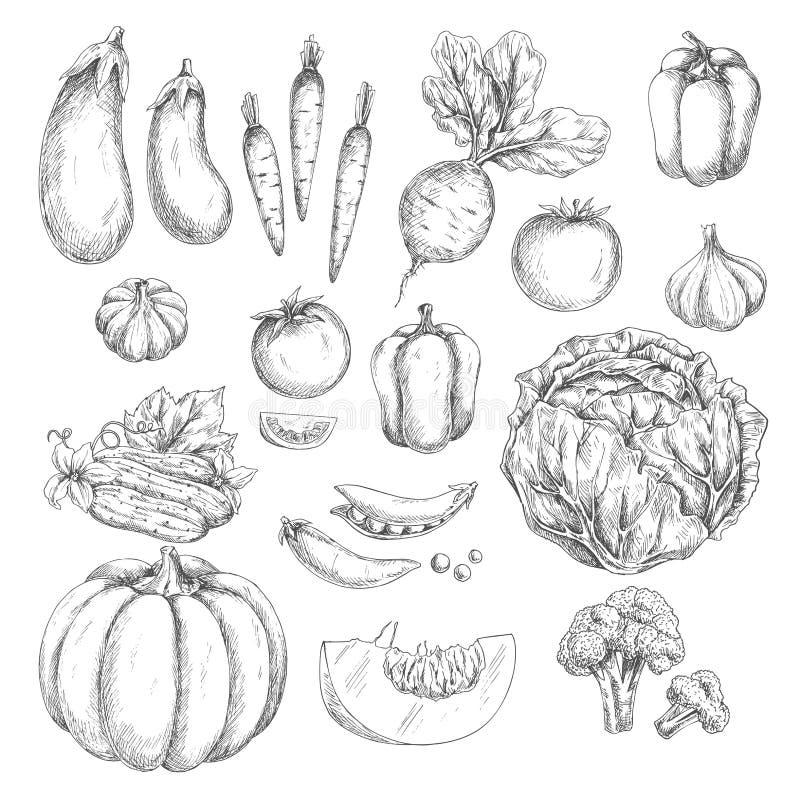 Ícones isolados vetor do esboço dos vegetais ilustração stock