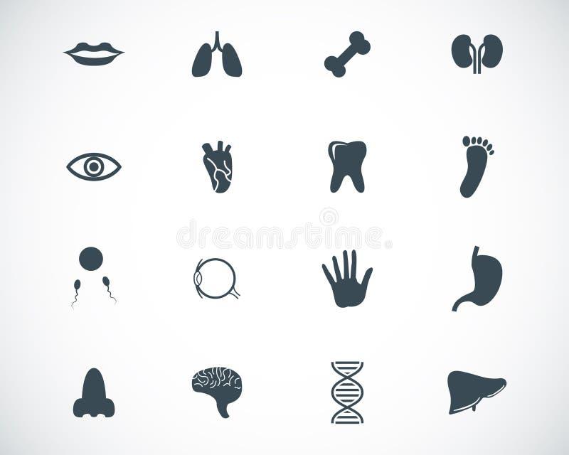 Ícones pretos da anatomia do vetor ilustração do vetor