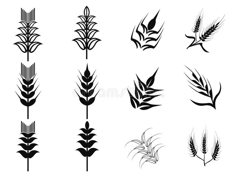 Ícones pretos do trigo ajustados ilustração do vetor