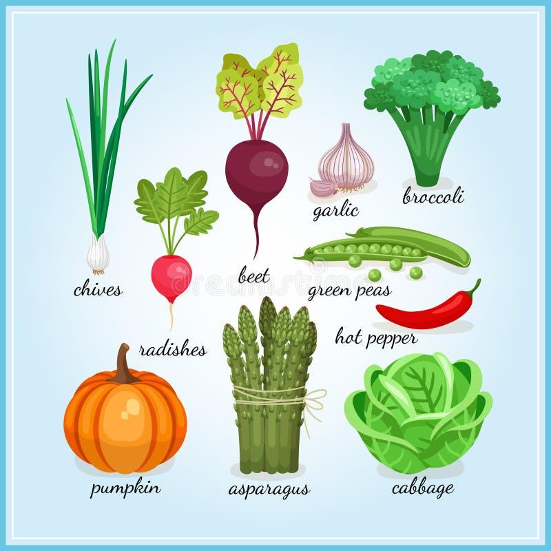 Ícones saudáveis dos legumes frescos ilustração royalty free