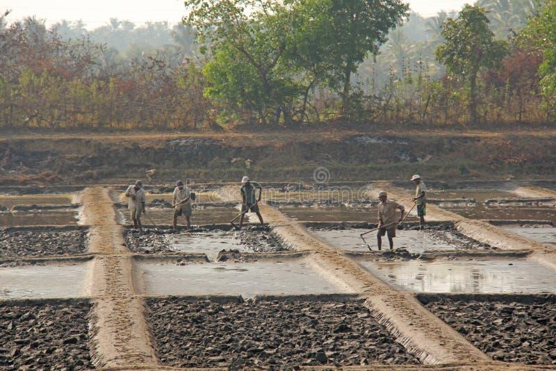Índia, GOA, o 19 de janeiro de 2018 Os homens trabalham no campo, escavam ou aram a terra com pás Trabalho de manual pesado na Ín imagens de stock royalty free