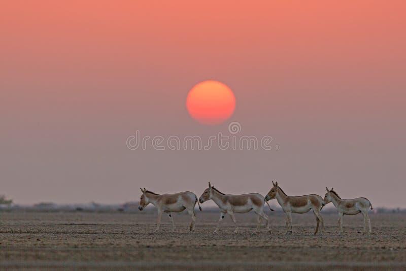 Índio Selvagens em frente a um belo sol imagem de stock royalty free