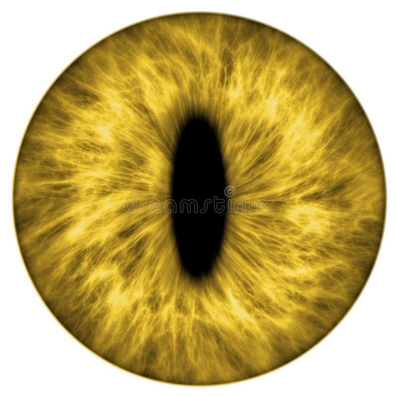 Íris animal amarela ilustração do vetor