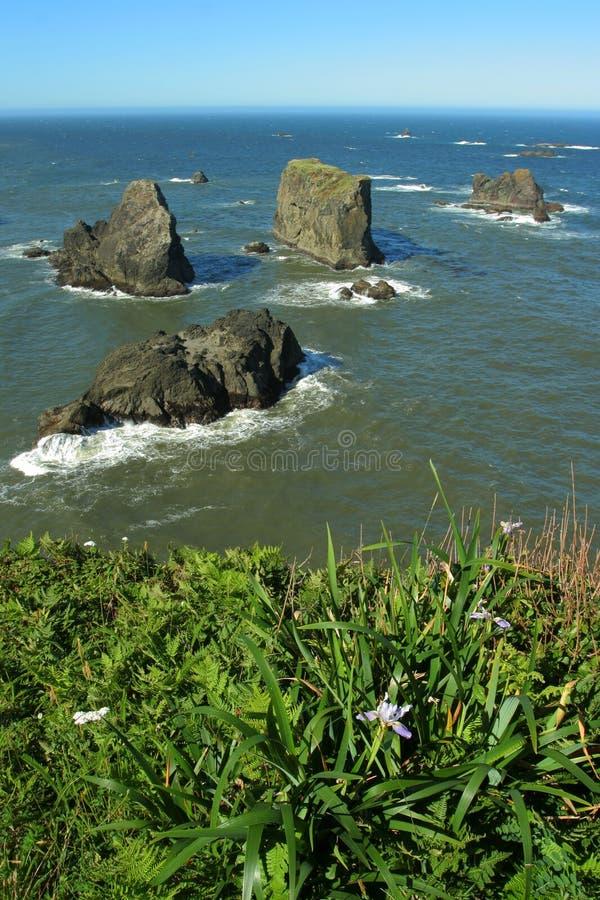 Íris de Oregon e rochas litorais imagem de stock