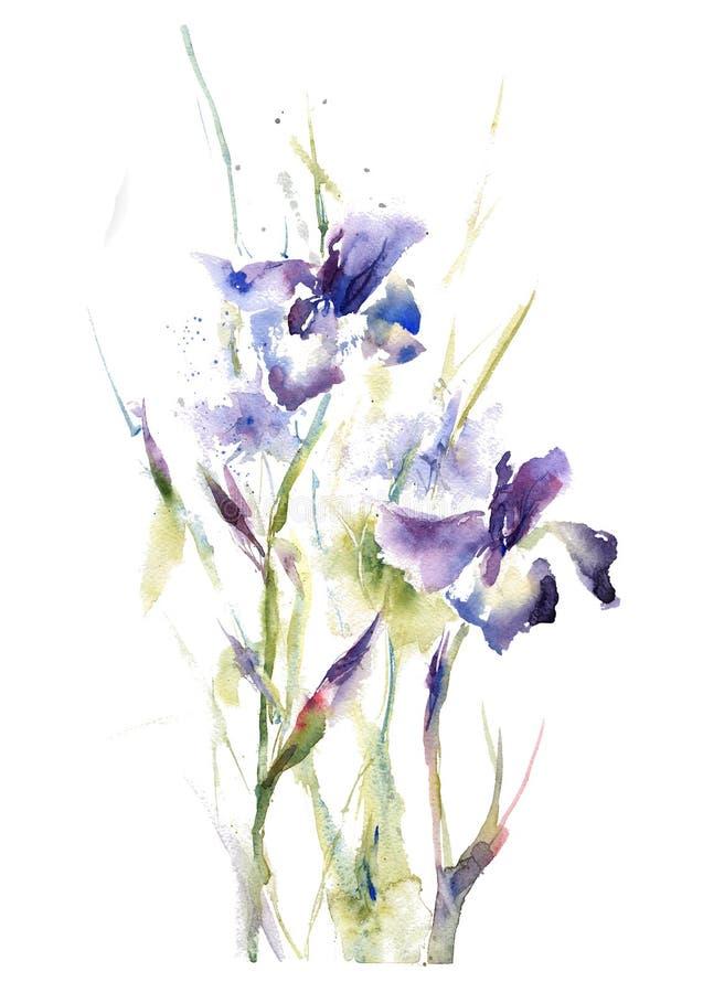 A íris do verão do desenho da mão da aquarela da coleção floresce o ramalhete ilustração do vetor