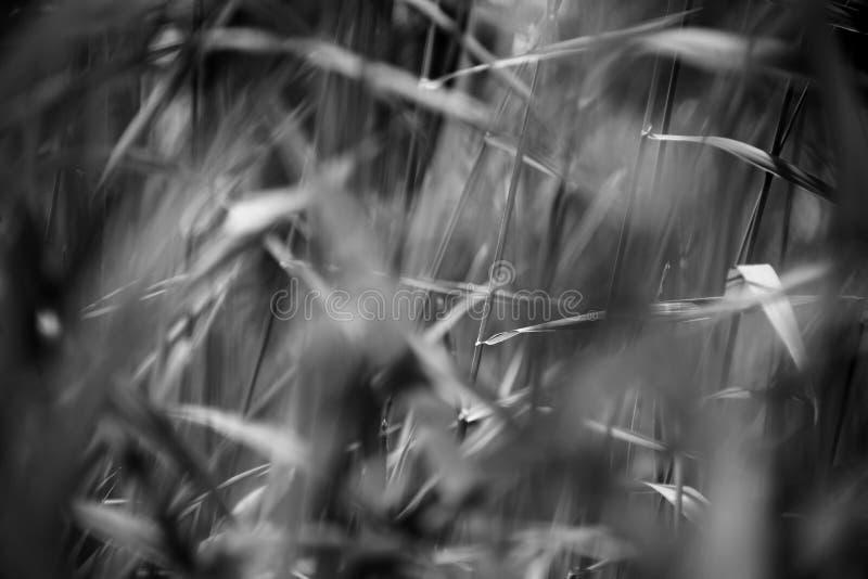 Άγρια χλόη σε έναν τομέα στοκ εικόνα