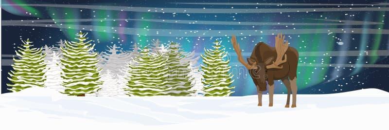 Άλκες στη χειμερινή κομψή δασική νύχτα Βόρεια φω'τα στον ουρανό απεικόνιση αποθεμάτων