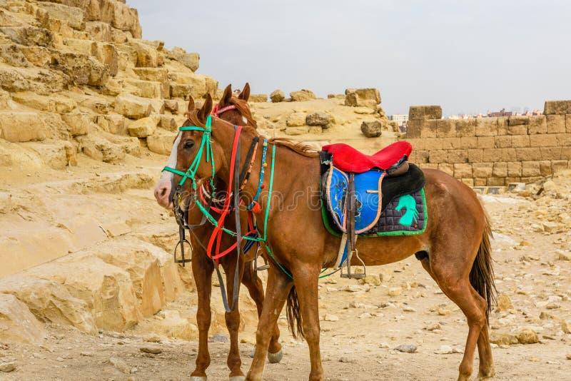 Άλογα κοντά στις μεγάλες πυραμίδες σε Giza, Αίγυπτος στοκ φωτογραφίες με δικαίωμα ελεύθερης χρήσης