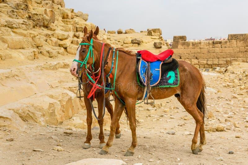 Άλογα κοντά στις μεγάλες πυραμίδες σε Giza, Αίγυπτος στοκ εικόνα με δικαίωμα ελεύθερης χρήσης