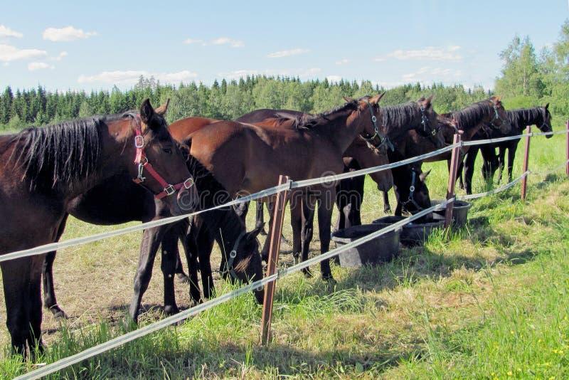 Άλογα στο λιβάδι στοκ φωτογραφίες