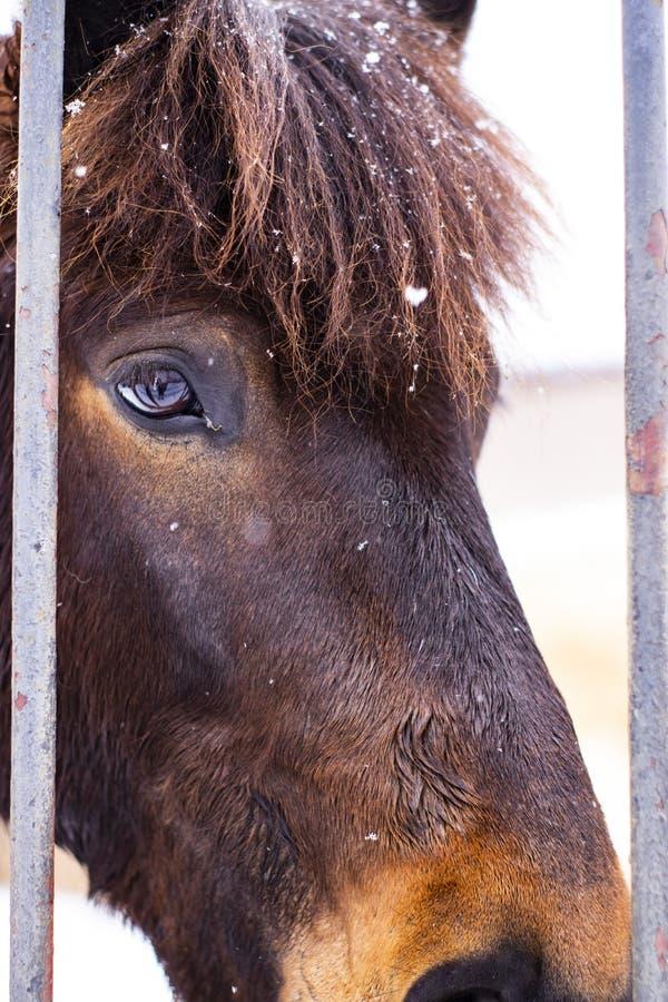Άλογο στη μάνδρα για τα άλογα στοκ φωτογραφία με δικαίωμα ελεύθερης χρήσης