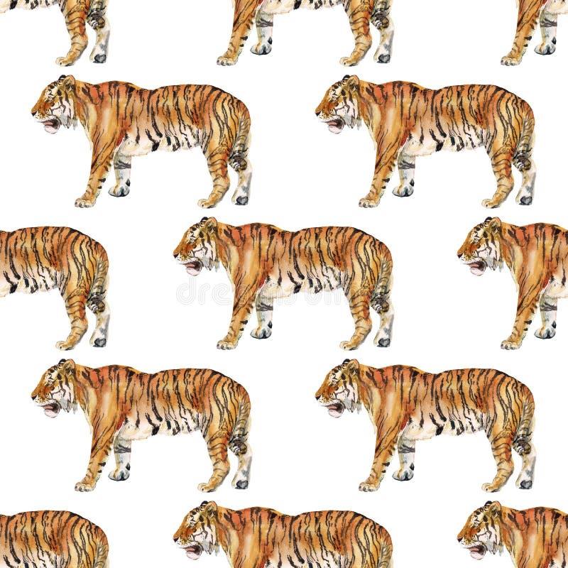 Άνευ ραφής σχέδιο με την τίγρη διανυσματική απεικόνιση