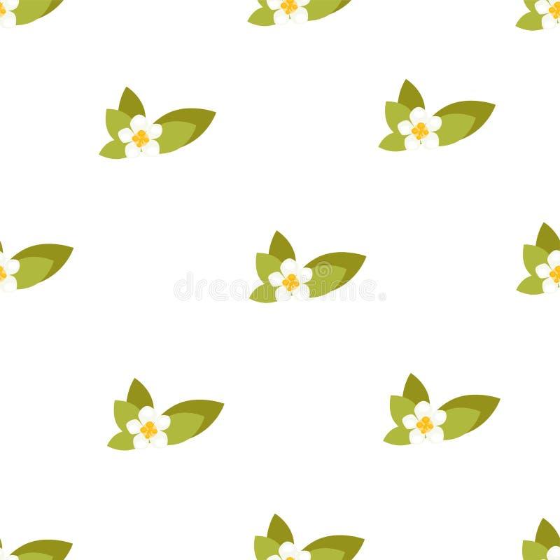 Άνευ ραφής σχέδιο με jasmine τα λουλούδια Διανυσματική ανασκόπηση ελεύθερη απεικόνιση δικαιώματος