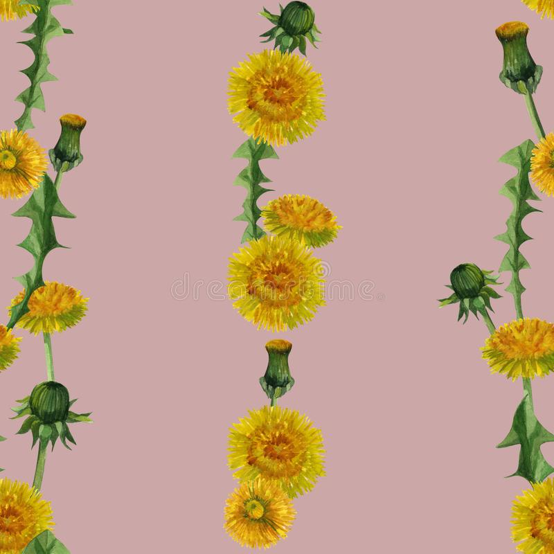 Άνευ ραφής υπόβαθρο σχεδίων σύστασης wildflowers πικραλίδων Watercolor διανυσματική απεικόνιση
