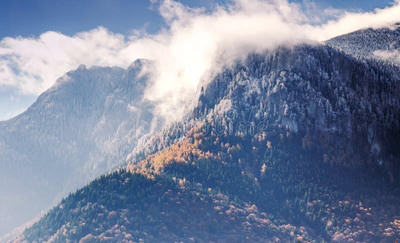Άνοιξη στο βουνό Ceahlau, Ρουμανία στοκ εικόνες