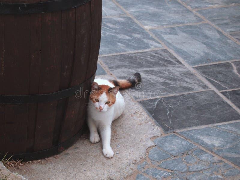 Άσπρος-κόκκινη γάτα κοντά σε ένα τεράστιο βαρέλι στην οδό της ελληνικής πόλης Ρέτχυμνου στοκ εικόνες