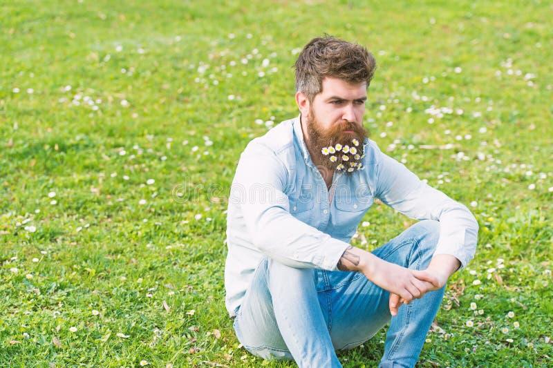 Άτομο με την ήρεμη χαλάρωση προσώπου στο χλοώδη τομέα με τα άγρια λουλούδια Όμορφος τύπος με τη μαργαρίτα ή chamomile λουλούδια σ στοκ εικόνες