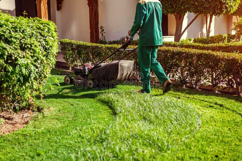 Άτομο που κόβει τη χλόη με έναν θεριστή χορτοταπήτων από το ξενοδοχείο Ο εργαζόμενος κόβει το χορτοτάπητα στο θερινό κήπο στοκ εικόνες