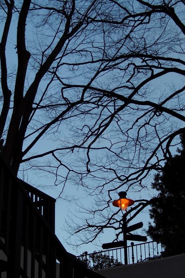 Άφυλλα δέντρα στη σκιαγραφία φθινοπώρου, στην περιοχή πάρκων Σούρουπο του λυκόφατος Και το φως από το λαμπτήρα Για το υπόβαθρο, ν στοκ εικόνα με δικαίωμα ελεύθερης χρήσης
