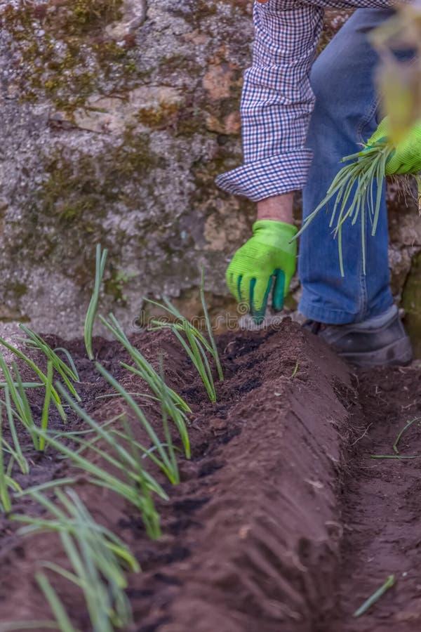 Άποψη κήπων με τον αγρότη που φυτεύει παραδοσιακά το κρεμμύδι στον οικολογικό φυτικό κήπο στοκ φωτογραφία με δικαίωμα ελεύθερης χρήσης