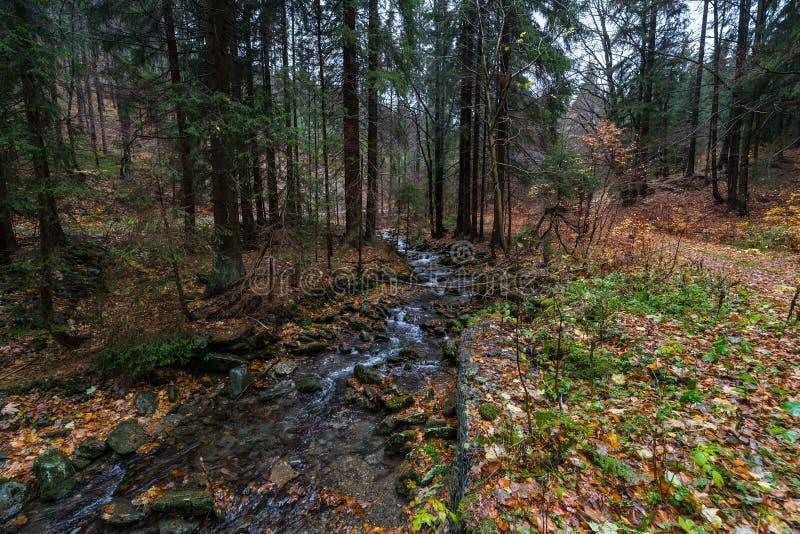 Ένας μικρός ποταμός στο δάσος φθινοπώρου στοκ εικόνες
