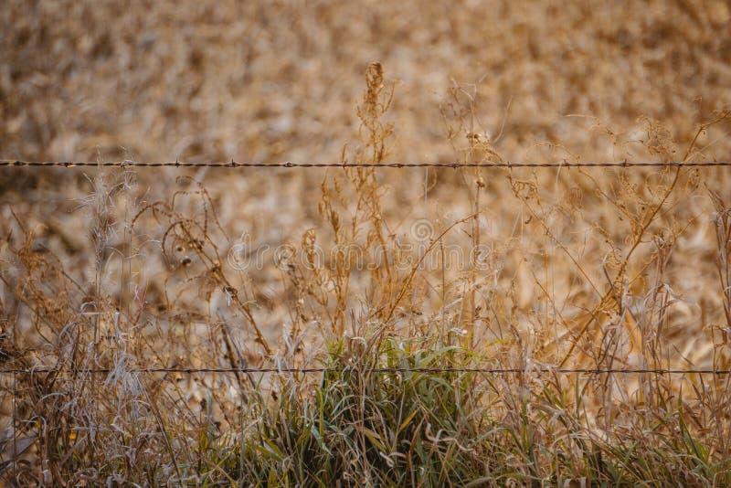 Ένας οδοντωτός - ο φράκτης καλωδίων φρουρεί έναν αγροτικό αγροτικό τομέα στη κομητεία του Ντάλλας, Αϊόβα στοκ φωτογραφία με δικαίωμα ελεύθερης χρήσης